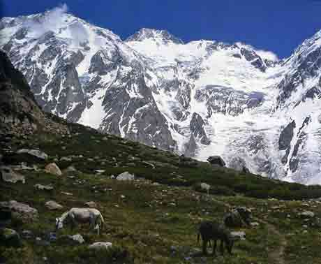 Donkeys Graze Near Base Camp Below Nanga Parbat Diamir Face - Mount Everest, Nanga Parbat, Dhaulagiri mit Dieter Porsche book